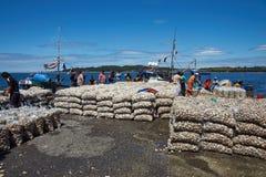 Landa musslor Royaltyfri Foto