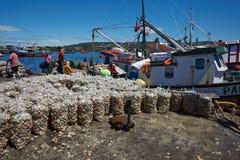 Landa musslor Arkivbild