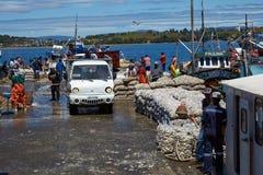 Landa musslor Fotografering för Bildbyråer