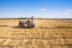 Landarbeiter-Ausschnittreis stockbild
