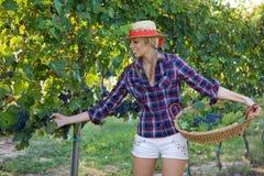 Landarbeiter der jungen Frau unter den Weinbergen Lizenzfreie Stockfotos