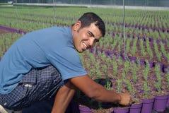 Landarbeiter, der neue Anlagen vorbereitet Stockfotos