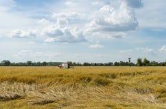 Landarbeiter, der Reis mit Traktor erntet Stockbilder