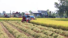 Landarbeiter, der Reis mit Traktor in Vietnam erntet stock video