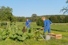 Landarbeiter, die im Gemüsegarten helfen Lizenzfreie Stockfotografie