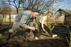 Landarbeiter in seinem Gemüsegarten Lizenzfreie Stockfotografie