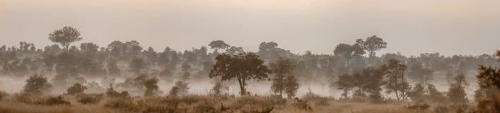 Landascape de la savane de Mysty en parc national de Kruger, Afrique du Sud images libres de droits
