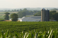 Landbauernhof Lizenzfreies Stockfoto