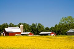 Landbauernhof im Frühjahr Stockbilder