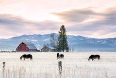 Landbauernhof mit Scheune und Pferden Stockfotos