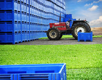 Landbauernhofproduktion Stockfoto