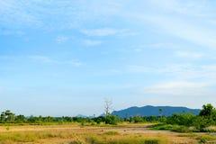 Landbomen en blauwe hemel Royalty-vrije Stock Afbeelding