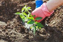 Landbouw royalty-vrije stock afbeeldingen