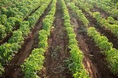 Landbouw Royalty-vrije Stock Foto's