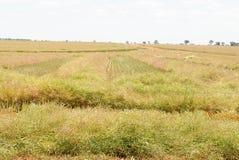 Landbouw Royalty-vrije Stock Fotografie