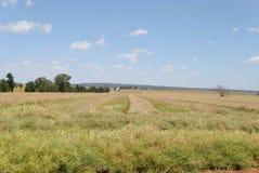 Landbouw Stock Foto's
