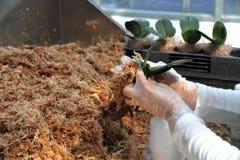 Landbouw biotechnologie stock afbeeldingen