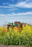 Landbouw, canolainstallatie in de lente Royalty-vrije Stock Fotografie