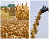 Landbouw collage Inzameling van landbouwbeeld stock fotografie