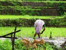Landbouw Dame stock afbeeldingen