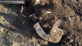 Landbouw De auto van de landbouwer Landbouwermolens die de grond ploegen stock videobeelden