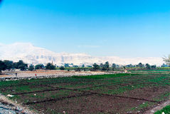 Landbouw in Egypte Stock Fotografie