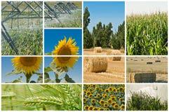 Landbouw en ecologie. Stock Fotografie