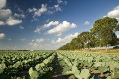 Landbouw en windmolens Stock Fotografie