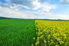 Landbouw fild Stock Afbeelding