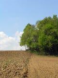 Landbouw Gebied Royalty-vrije Stock Foto