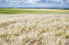 Landbouw gebied Stock Foto's