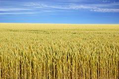 Landbouw gebied Stock Fotografie