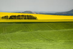 Landbouw Gebied - Grond Stock Fotografie