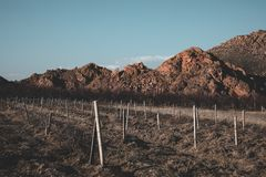 Landbouw gebied royalty-vrije stock fotografie