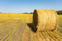 Landbouw gebied Ronde bundels van droog gras op het gebied tegen de blauwe hemel het broodjes dichte omhooggaand van het landbouw stock foto