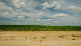 Landbouw gebied Timelapse landbouwgebied De wolk beweegt snel 41 stock footage