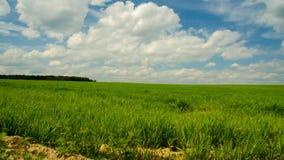 Landbouw gebied Timelapse landbouwgebied De wolk beweegt snel 42 stock video