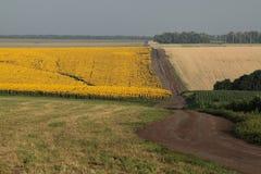 Landbouw gebieden Stock Foto