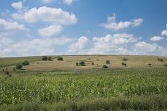 Landbouw gebieden Stock Afbeeldingen