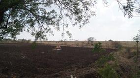 Landbouw gebieden Stock Fotografie