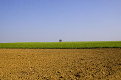 Landbouw gebieden in land Royalty-vrije Stock Foto