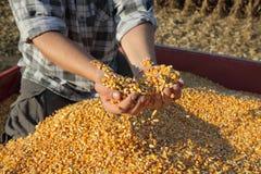 Landbouw, graanoogst, landbouwer en gewas royalty-vrije stock foto