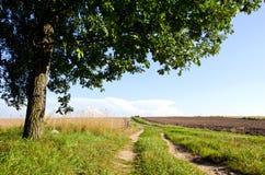 Landbouw het gebieds eiken boom van de achtergrondgrintweg Stock Foto