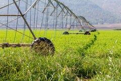 Landbouw het water geven systeem Irrigatiesysteem royalty-vrije stock afbeelding