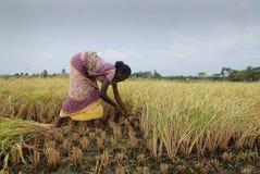Landbouw in India royalty-vrije stock foto