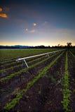 Landbouw Irrigatie Stock Foto