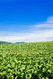Landbouw Landschap stock afbeeldingen