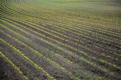 Landbouw landschap Royalty-vrije Stock Fotografie