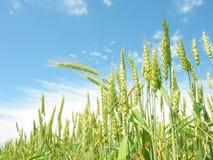 Landbouw landschap Stock Afbeelding