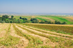 Landbouw landschap Royalty-vrije Stock Afbeelding